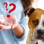 Quelle dose d'aspirine pour mon chien ?