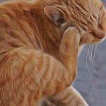 soigner teigne chat remèdes naturels