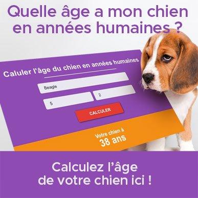 comment calculer age du chien